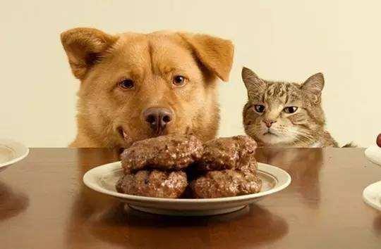 怎么让狗狗不吃陌生人的食物